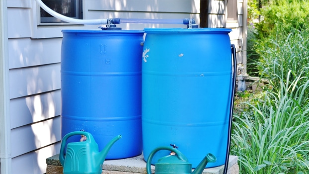 Rain barrels collect water and debris making a great habitat for mosquitoes